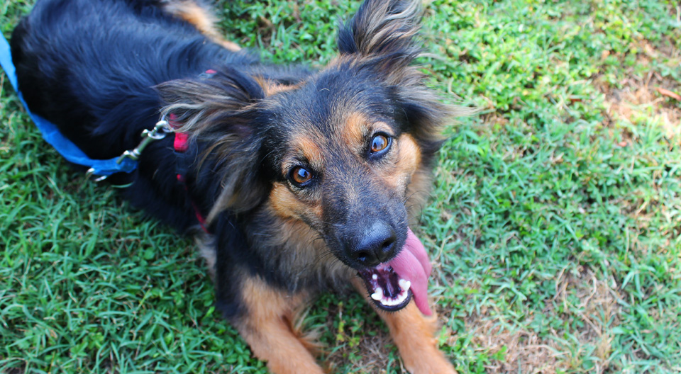 Angela Femmina cerca adozione canile milano