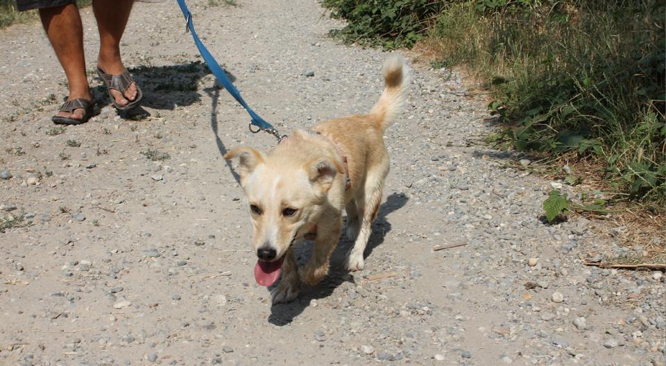 Blondie Femmina cerca adozione canile milano