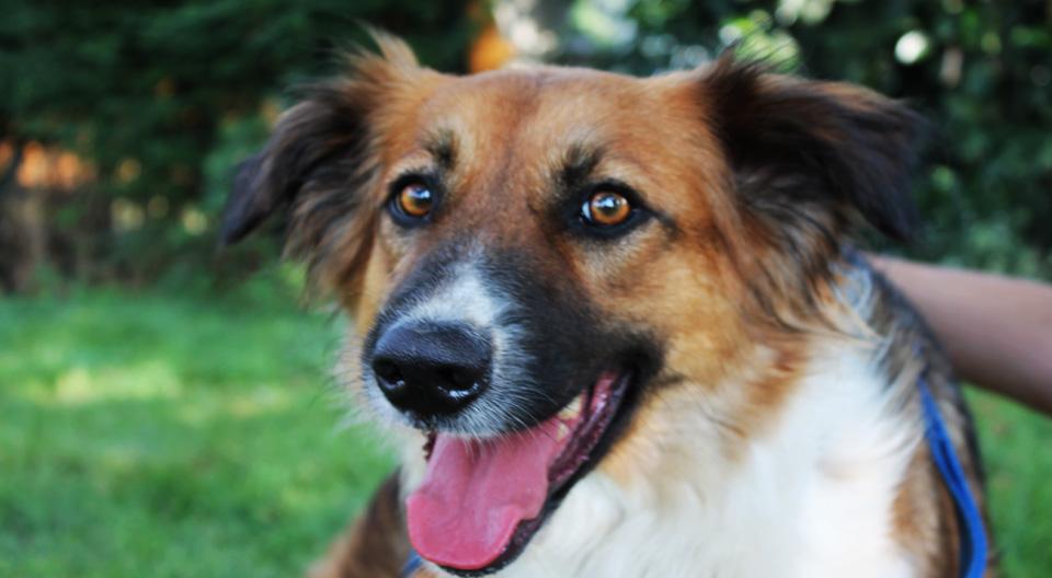 Stella Femmina cerca adozione canile milano