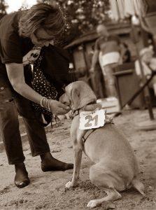 Volontaria canile milano sud